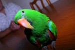 Попугай предотвратил ограбление