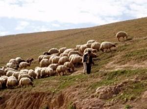азербайджанский пастух