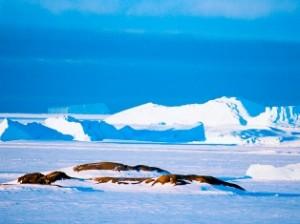 под 4 метрами льда