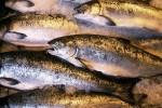 Рыба из Армении