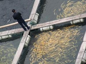 рыбхозы