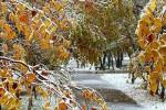 дожди и мокрый снег