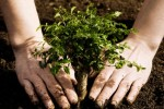 Армянский проект посадки деревьев