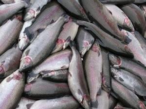 экспорт рыбы