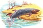 рыбы по суше