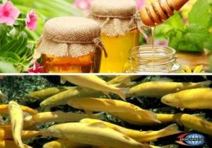 рыба и мед