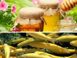 мёд и рыба
