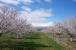 сады Армении