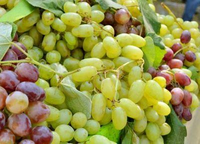 армянский виноград фото