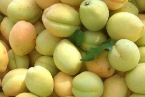 абрикосы в Армении