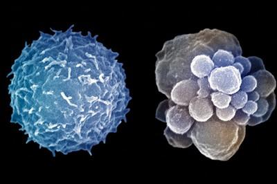 Клетки