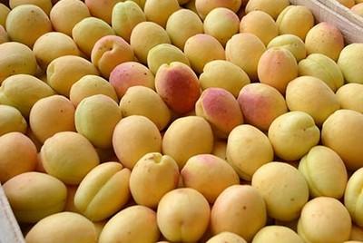 абрикосы Армении