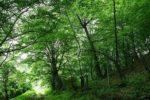 лес в Армении