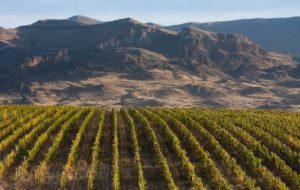 виноградник в Армении
