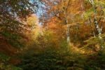 Леса Армении