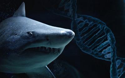 Геном белой акулы